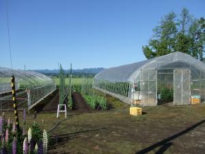 ビニールハウスと野菜畑